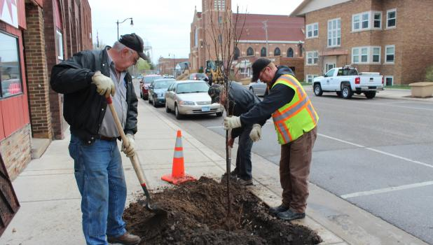 At least five Japanese Lilac trees  were planted in downtown Staples May 9, replacing trees that had not survived the previous year. Pictured above near the Stomping Grounds coffee shop at 4th St. NE are, from left, public works department employees Clyde Mertens, Bruce Grondahl, Steve Statema.
